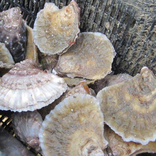 Jersey Sea Farms
